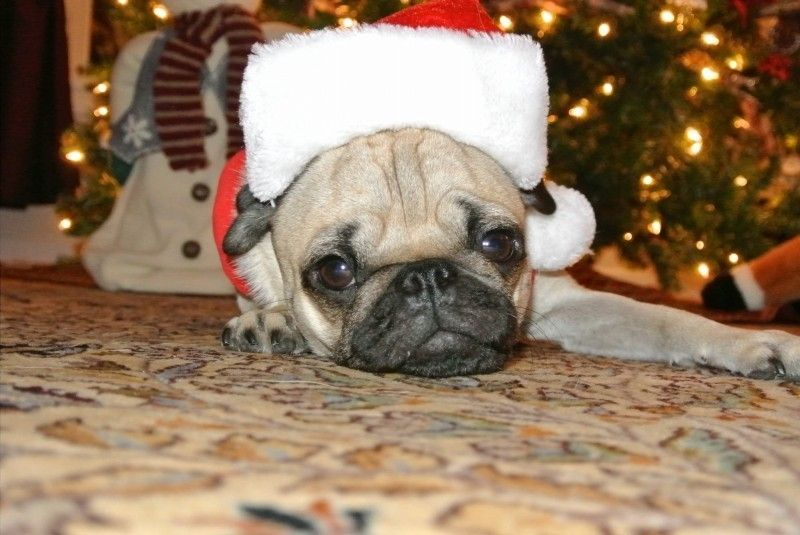 Happy Holidays From The Oakley Forum!!!! - 8a589e970440f2248cd39454076dde33.jpg
