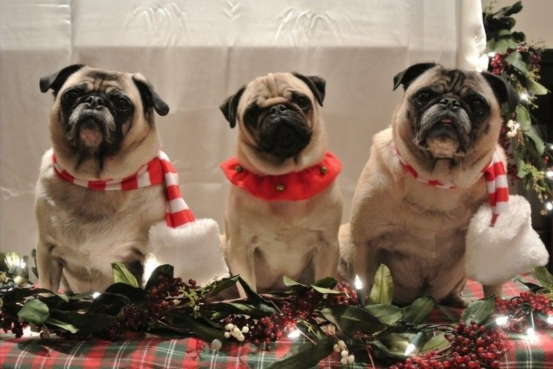 Happy Holidays From The Oakley Forum!!!! - c91ea79d3d1bddebc06273de7fa0843b.jpg