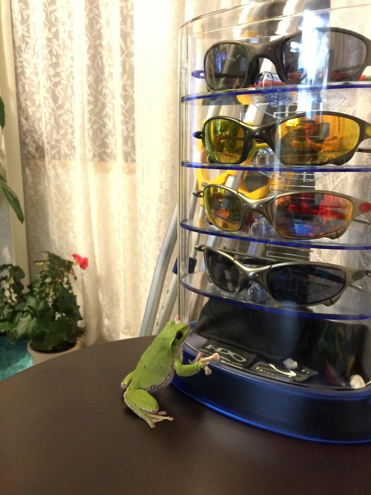My frog&Juliets. - image.jpg