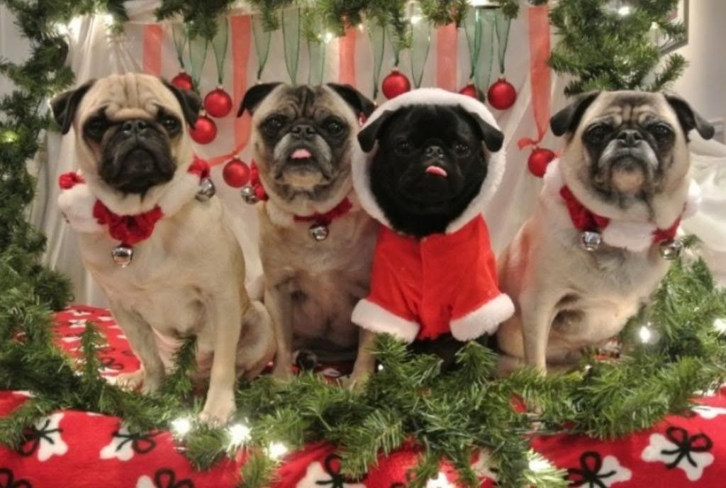 Our X-Mas Card This Year...bunch Of Monster Dogs/Pups! - image.jpg