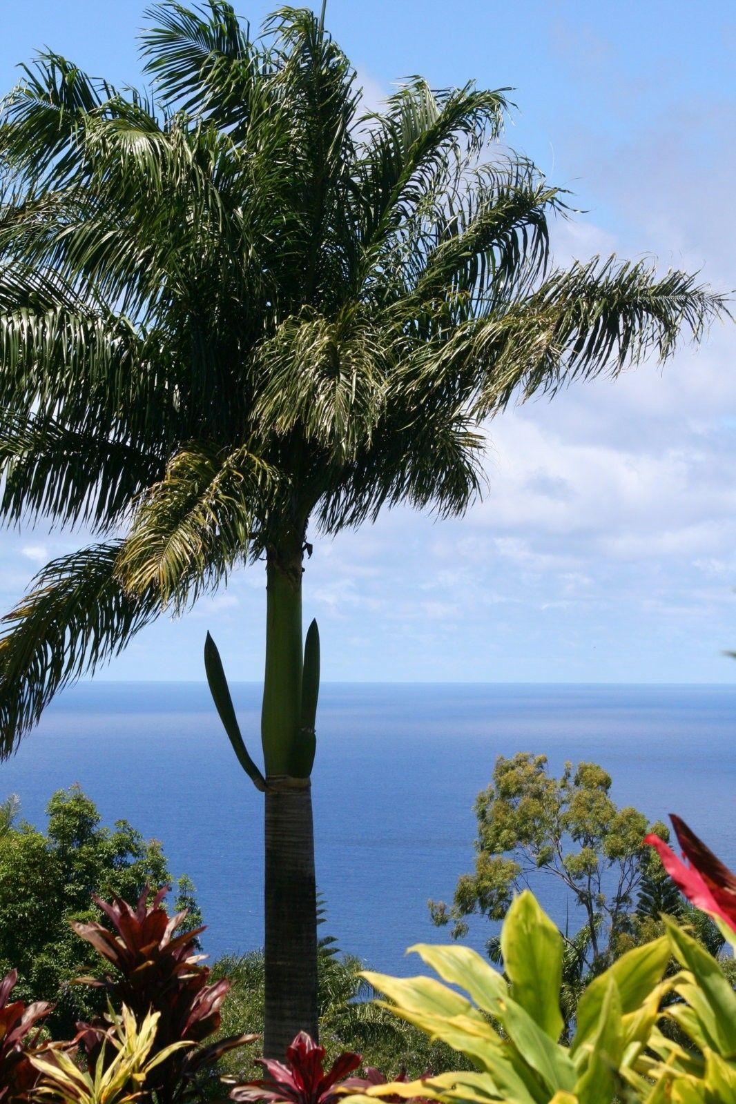 Oakley Event in Oahu, Hawaii - IMG_0550.JPG