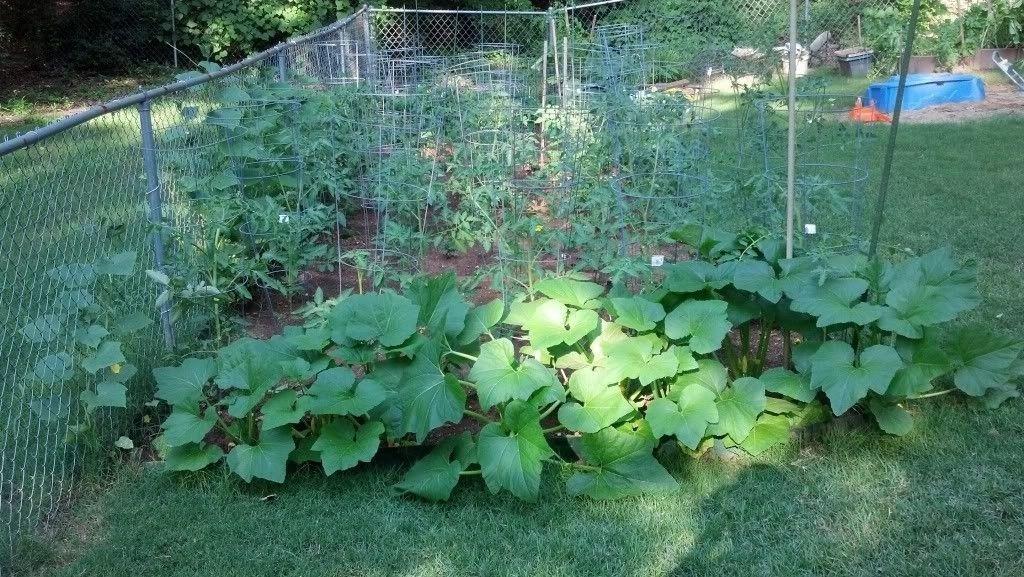 Anybody Grow A Garden - IMG_20130611_175213_541_zpse150ac1f.jpg