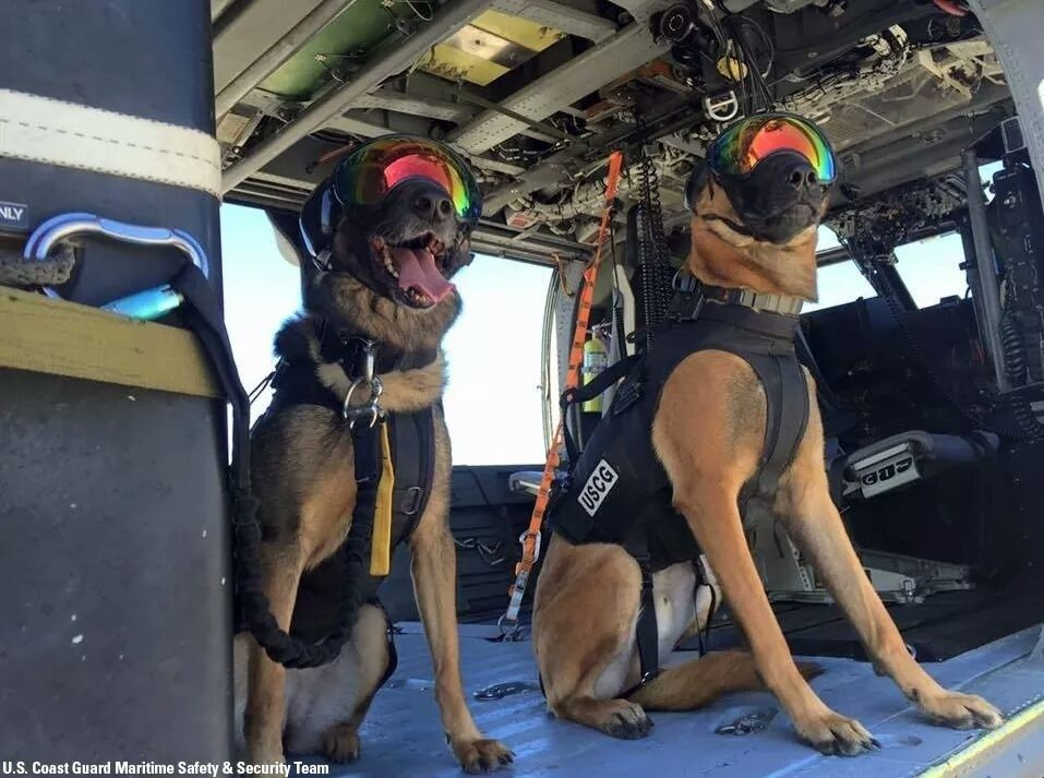 Are these canines wearing oakleys? - tmp_30007-FB_IMG_1460150788174129473923.jpg