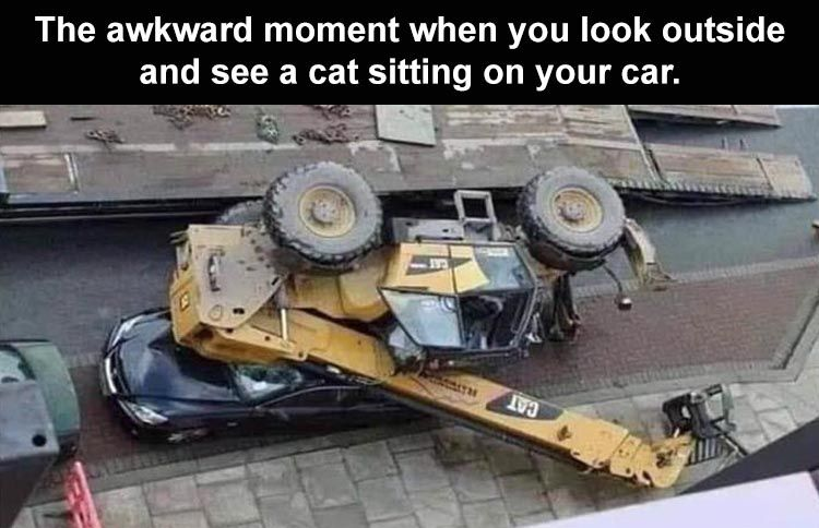 you-awkward-moment-when-you-look-out-the-window-and-you-see-a-cat-sitting-on-your-car-1.jpg